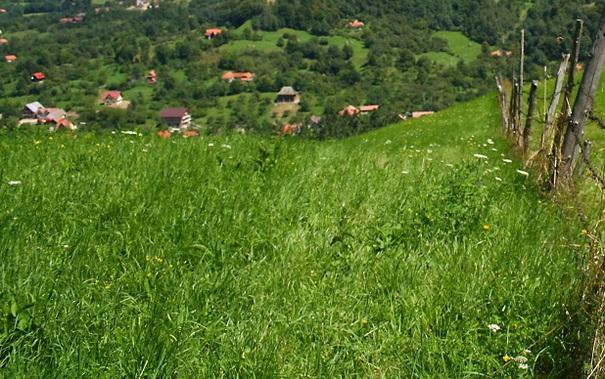 Cadavrul unei femei dispărute în urmă cu şase luni, găsit pe un teren din Arad