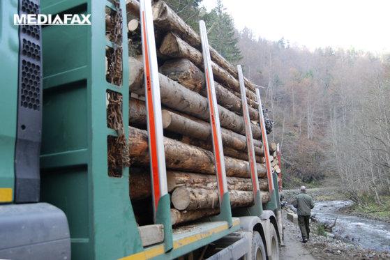 Imaginea articolului Un pădurar din Mureş, agresat şi sechestrat de hoţii de lemne