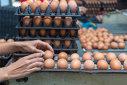 Imaginea articolului Un supermarket din România anunţă ieftinirea ouălor de la micii fermieri români, după intervenţia ministrului Agriculturii, Petre Daea