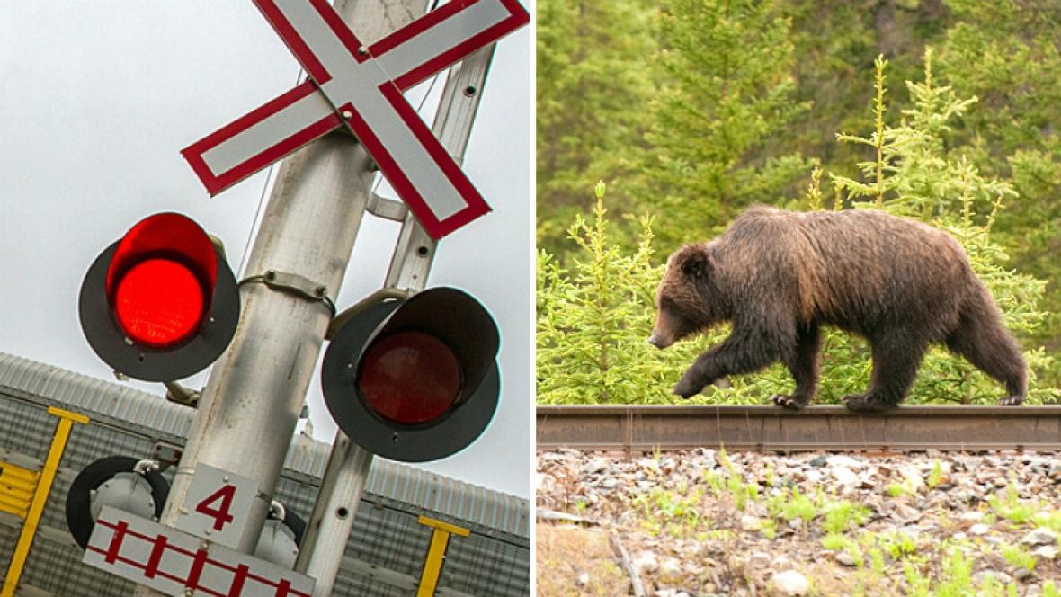 Un urs a fost omorât de un tren în judeţul Vrancea
