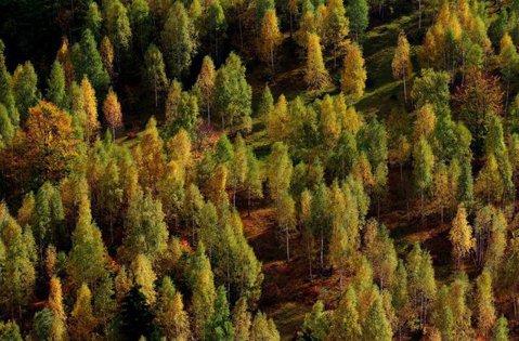 Condamnări în cazul retrocedării ilegale a trei MUNŢI dn România. Cine a cumpărat pădurile de la inculpaţi