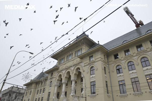 Imaginea articolului Primăria Capitalei vrea să facă un drum de acces într-un cartier rezidenţial, prin pădurea Băneasa