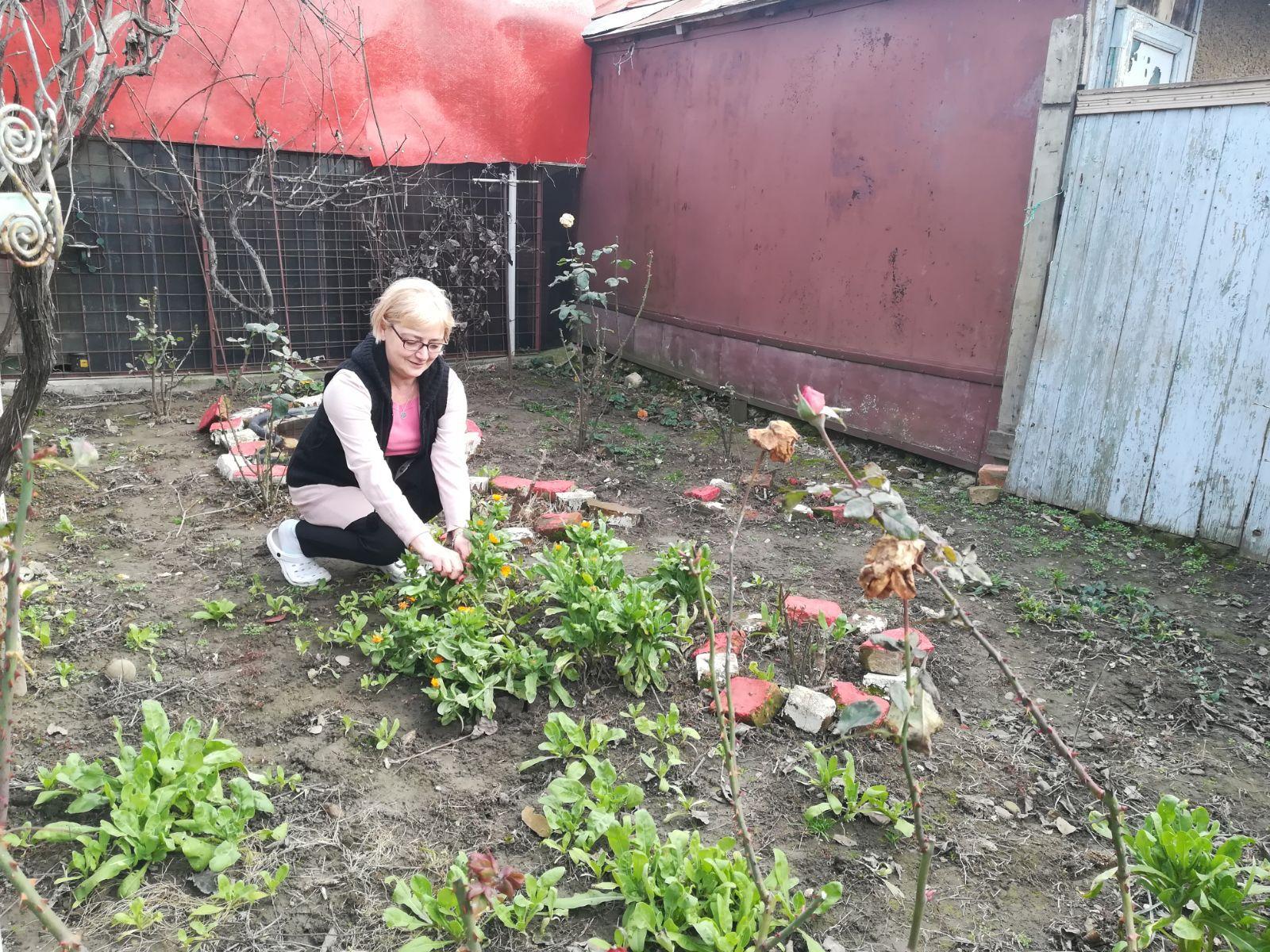 Căpşuni şi flori de primăvară, apărute în ianuarie din cauza temperaturilor ridicate - GALERIE FOTO