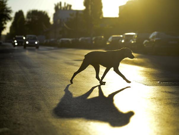 Imaginea articolului Un bărbat din Galaţi care a fost muşcat de un câine fără stăpân va fi despăgubit de Primărie