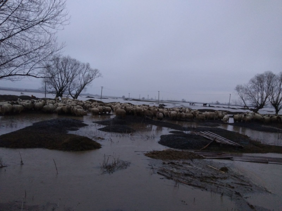 Imaginea articolului Dăncilă, despre inundaţii: E posibil să accesăm Fondul european de solidaritate