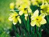 Imaginea articolului Floriile, sărbătoarea creştină care vesteşte Paştele, dar şi a celor cu nume de floare. Tradiţii şi obiceiuri
