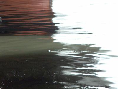 Imaginea articolului POLUARE cu ţiţei pe râul Jiu. Se intervine prin instalarea de baraje - FOTO