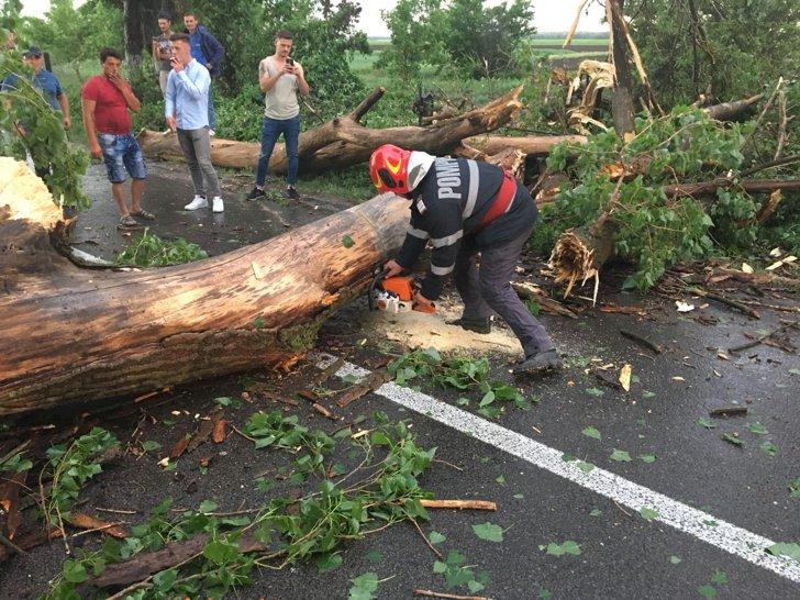 Imaginea articolului Furtună la Cluj: Copac căzut pe trei autoturisme, subsoluri inundate în urma unei ploi torenţiale