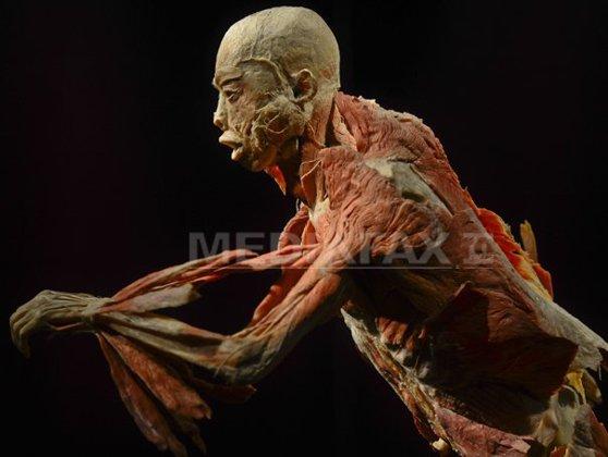 """Imaginea articolului Timişoara: Aproape 400 de vizitatori în prima zi a controversatei expoziţii """"Our Body"""" - VIDEO"""