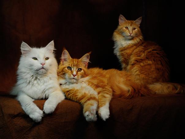 Imaginea articolului TOP 5 Pisici în literatură. Motanul Cheshire, felina Thomasina cea blândă şi Macavity, cotoiul cel rău