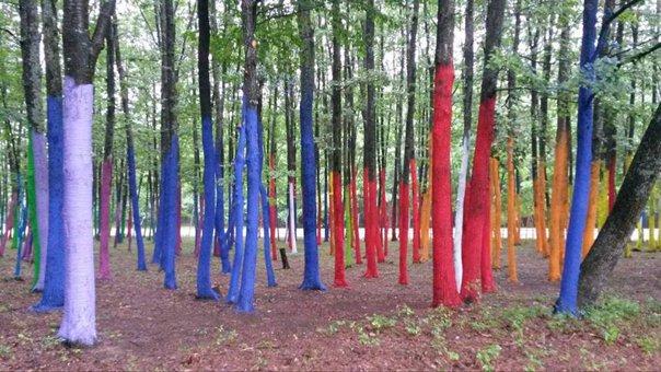 Imaginea articolului GALERIE FOTO | Manifest artistic împotriva defrişărilor: Sute de copaci dintr-o pădure, coloraţi cu vopsea ecologică
