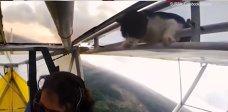 Imaginea articolului IMAGINILE ZILEI. O pisică are parte de un zbor cu un avion de mici dimensiuni
