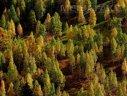 Imaginea articolului Donald Trump ar putea schimba o lege pentru a permite forarea sau mineritul în parcurile naţionale din SUA