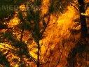Imaginea articolului Mai multe sute de persoane au fost evacuate în urma unui incendiu de vegetaţie în sudul Spaniei