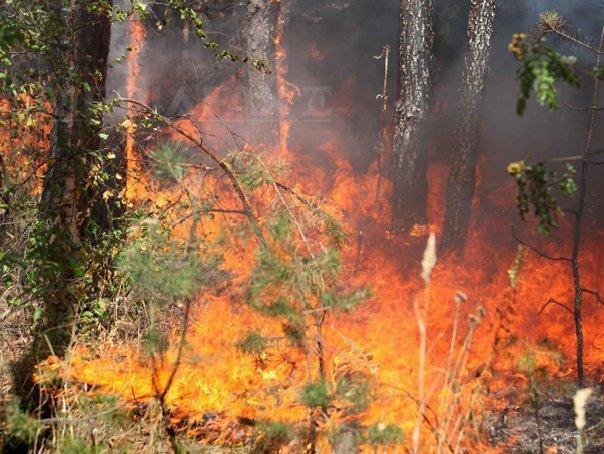 Un român acuzat că a provocat intenţionat incendii de vegetaţie a fost arestat în sudul Italiei - FOTO
