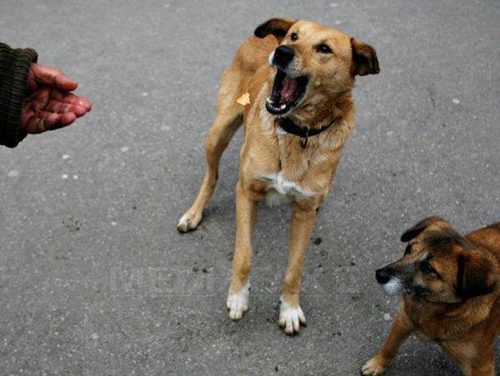 Imaginea articolului Cum vrea Primăria din Sofia să înjumătăţească numărul câinilor vagabonzi, până în 2014