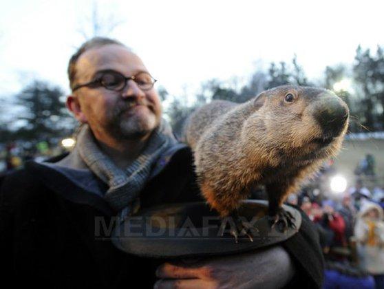 Imaginea articolului Marmota Phil ar putea fi arestată