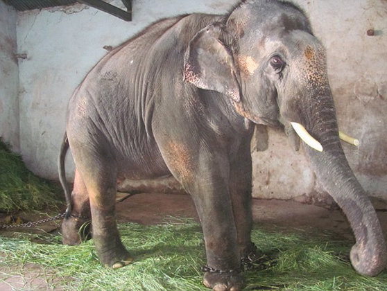 Imaginea articolului Un pui de elefant demonstrează întregii lumi că animalele au suflet mare - VIDEO