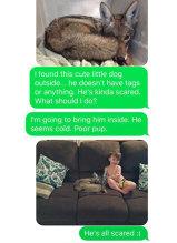 VIRAL: Şi-a anunţat soţul că a adus un câine acasă, dar de fapt era un coiot. Conversaţia celor doi soţi a făcut înconjurul lumii
