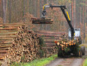 Imaginea articolului Ţara care nu mai acceptă tăierea nici măcăr a unui copac
