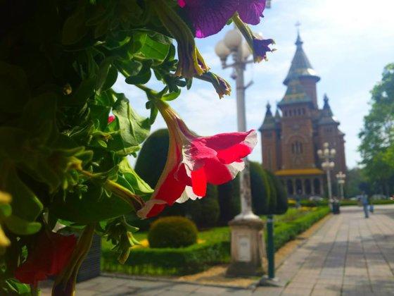 Imaginea articolului GALERIE FOTO Copaci cu cărţi, umbrele colorate şi aranjamente inedite, la Festivalul Florilor din Timişoara