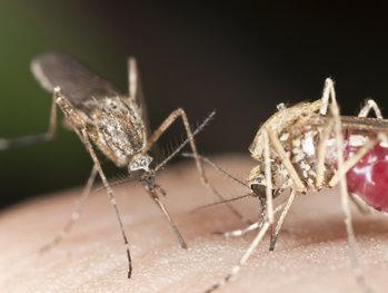 Explicaţia SPECIALIŞTILOR! De ce eşti muşcat de ţânţari mai des decât alte persoane?