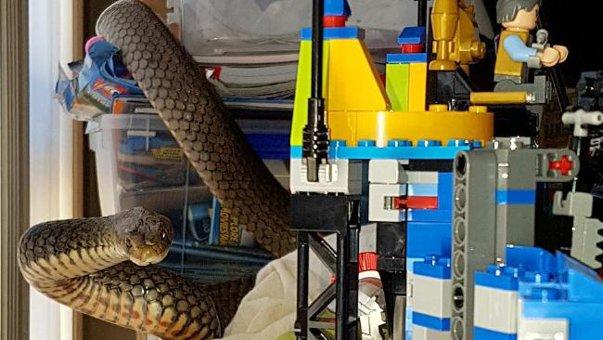 Imaginea articolului FOTO, VIDEO | Şarpe veninos, capturat dintre jucăriile unui copil mic. Echipa de salvare a prins periculoasa reptilă cu mâinile goale