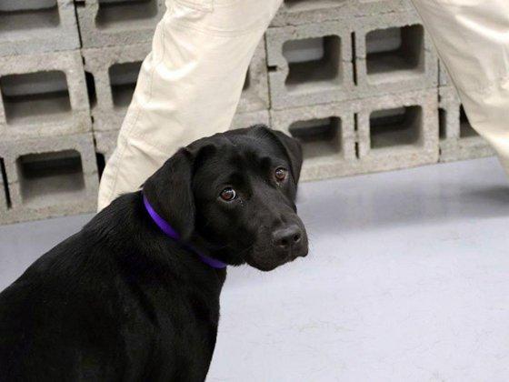 Imaginea articolului CIA renunţă la unul din câinii săi care adulmecă BOMBE pentru că vrea să joace în loc să caute explozibilii| GALERIE FOTO, VIDEO