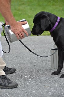 CIA renunţă la unul din câinii săi care adulmecă BOMBE pentru că vrea să joace în loc să caute explozibilii| GALERIE FOTO, VIDEO