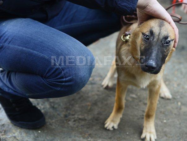 Fostă poliţistă olandeză luptă pentru câinii comunitari din România. A mers pe jos 2.000 de kilometri, prin şapte ţări