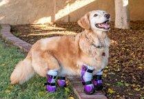 Cine pe cine inspiră? Întâlnirea emoţionantă dintre un copil cu picioarele amputate şi un câine fără membre, abandonat | VIDEO