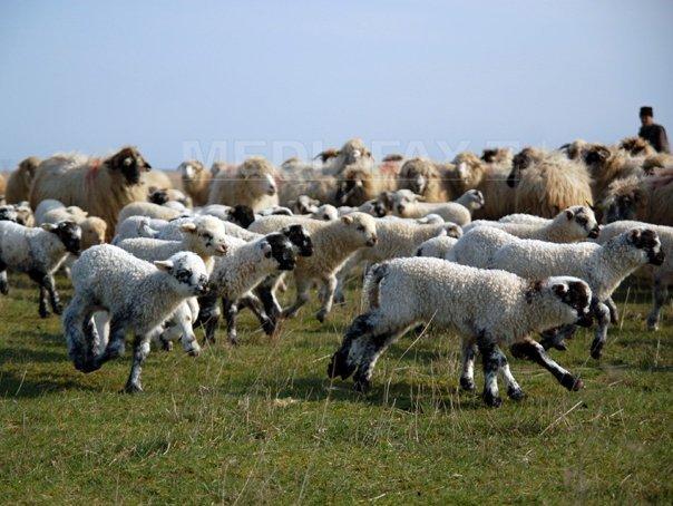 Imaginea articolului Un cioban român dă în judecată UE, alături de fermierii europeni afectaţi de schimbările climatice | VIDEO
