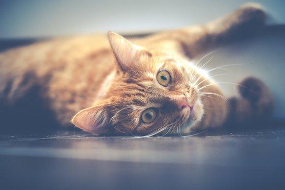 Imaginea articolului Ziua Internaţională a Pisicii, 8 august - Ce ar trebui să ştii dacă vrei o pisică