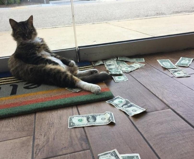 face bani pisică ce profesii pot câștiga pe Internet