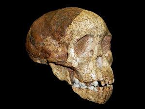 """MISTER vechi de 3 milioane de ani: """"Nu are caracteristici umane"""""""