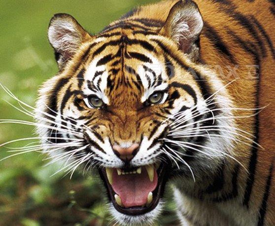 Imaginea articolului Raport WWF: Peste 50% din animalele sălbatice au dispărut de pe Terra în ultimii 40 de ani