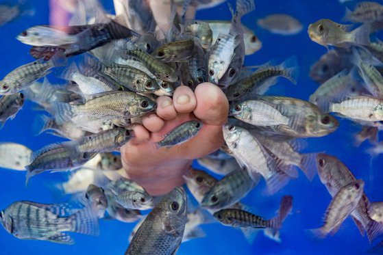 fish-pedicure-1530634505.jpg?width=560