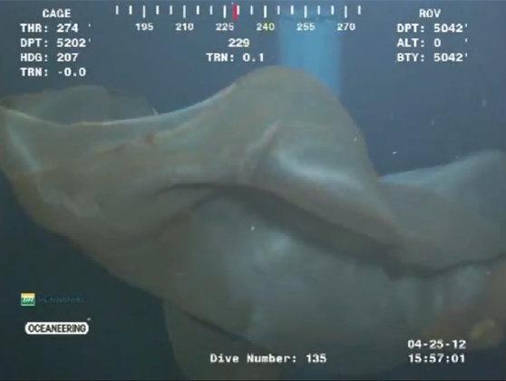 Imaginea articolului O creatură MISTERIOASĂ, filmată la mare adâncime? Nimeni nu poate spune exact ce este - FOTO, VIDEO