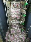 Un şobolan care a intrat într-un bancomat a reuşit să distrugă 18.000 de dolari. Cum a fost descoperit