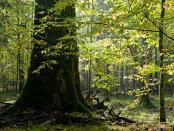 Am dat startul la împădurit, în 2017: 6.000 de puieţi într-o singură zi, la Siliştea Gumeşti
