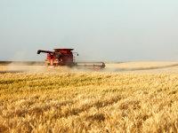 Agricost, cea mai mare fermă din România, a vândut în 2017 cereale şi plante oleaginoase de 360 mil. lei