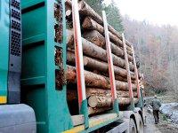 Exportul de cherestea s-a dublat în ultimii şase ani. Austriecii şi turcii trimit peste graniţele României lemn neprelucrat de 900 de milioane de euro
