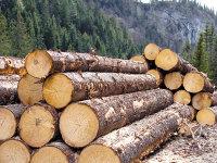 ZF Cei mai mari jucători din economie: Industria lemnului are patru miliardari în lei, statul român şi trei companii austriece
