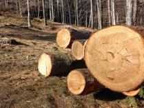 Turcii de la Kastamonu văd afaceri de 160 mil. euro la fabrica de prelucrare a lemnului din Reghin