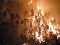 Pădurile ucigaşe ale Portugaliei aduc exporturi de 3 miliarde euro, cu 3.000 de locuri de muncă