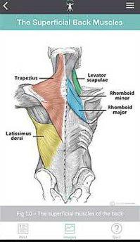 Aplicaţia zilei: Teach Me Anatomy