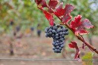 Moldova îşi reorientează exporturile de vin către Europa de Vest şi Europa Centrală