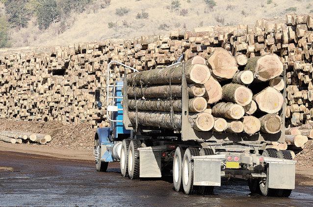 Exportul de buşteni a fost de 46 milioane de euro în primele luni ale anului 2013, arată datele Asociaţiei Producătorilor de Mobilă din România. Foto: Shutterstock