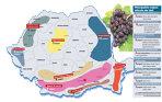 Harta vinului românesc: cu opt regiuni viticole, 37 de podgorii şi 180.000 de hectare de vie, România se află pe locul cinci în Europa