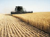 """Străinii ţin în palme exporturile de cereale pentru că au 70% din """"porţile"""" de ieşire la Dunăre şi la Marea Neagră"""